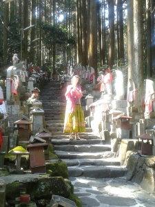 D Danbrook Japan